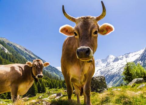 Het beste moment om weg te dromen op een Alpenweide