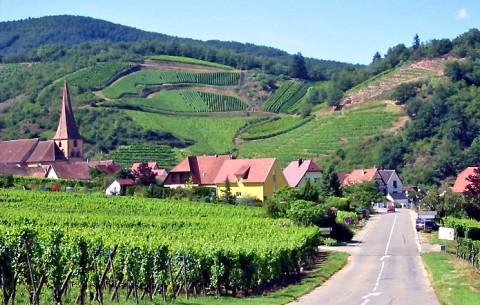 Wandelen, wijnproeven en lekker eten in de Elzas