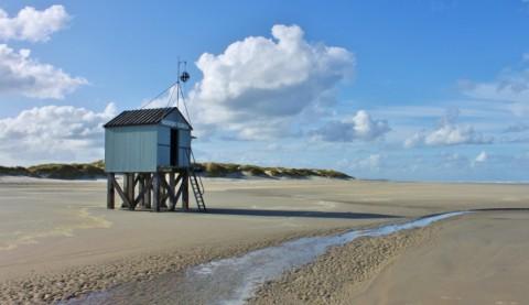 Hollandse wildernis: De Boschplaat in de winter