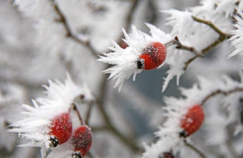 Tijd voor de Top 10 warme winterdranken