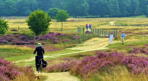 't Gooi: fietsparadijs voor nazomer en herfst