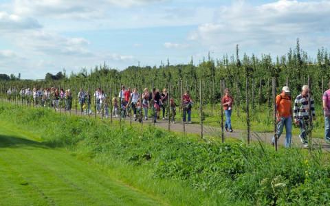 3 sept: Bourgondisch fruitwandelen en -fietsen in het land van Maas en Waal.