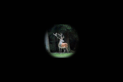17 juni: Avond wildexcursie De Dellen