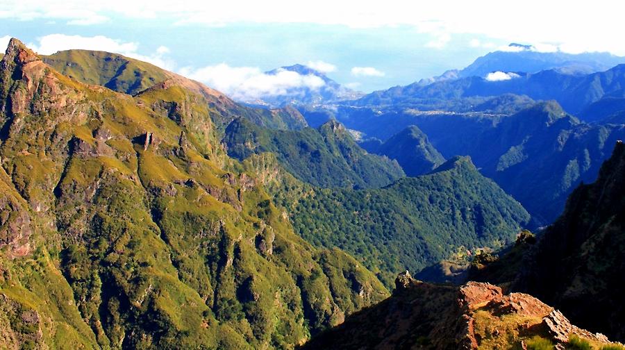 1443-Madeira-winter-(miez)-