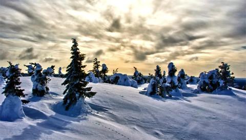 Sneeuwwandelen tussen de bossen en meren van Finland