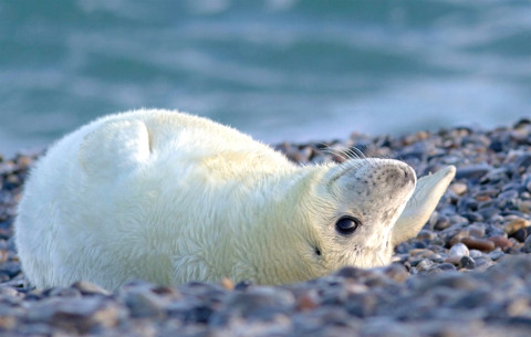 Dichtbij de Baby-zeehondjes op Helgoland