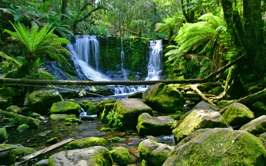 Tasmanië (foto Antwan Janssen, bestemminginbeeld)