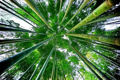 Ken je het geheim van de bamboe sok?