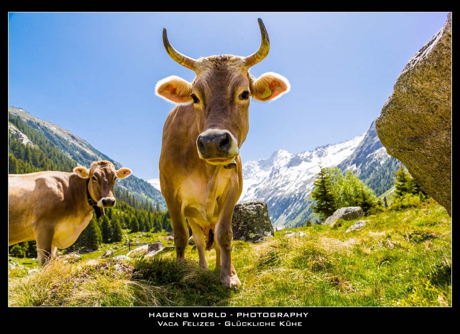 Hagens World The Alps (9)