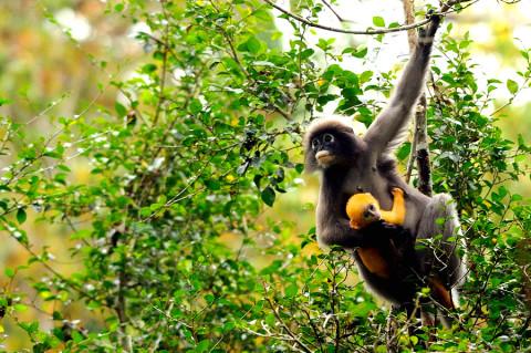 Hoeveel wild kom je tegen in Thailands grootste natuurpark?