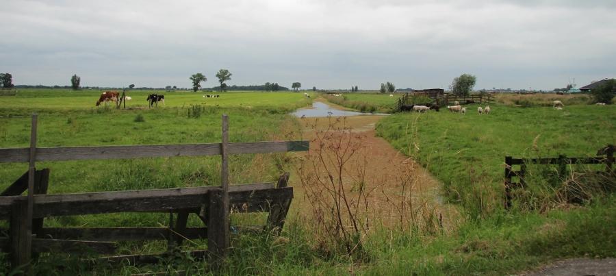 Typisch Hollands polderlandschap Alblasserwaard (foto Bert Knot, flickr)