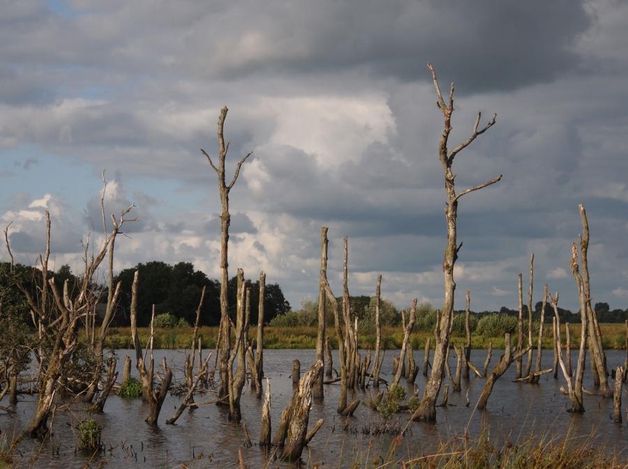 Het verdronken bos (foto Erik Tjallinks, flickr)
