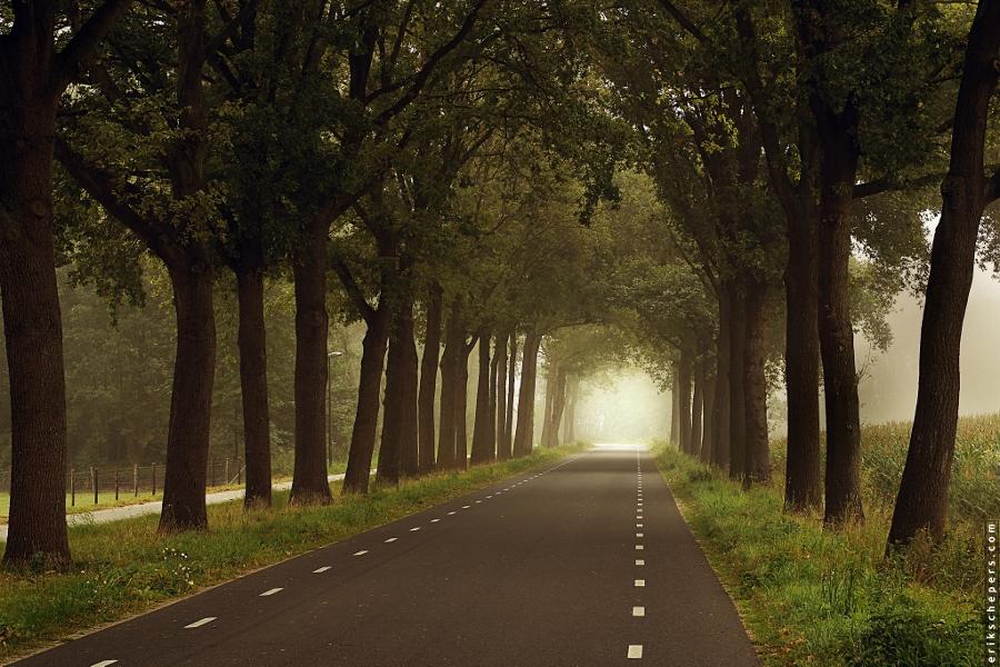 Limburgse bomenlanen (foto Erik Schepers, flickr)