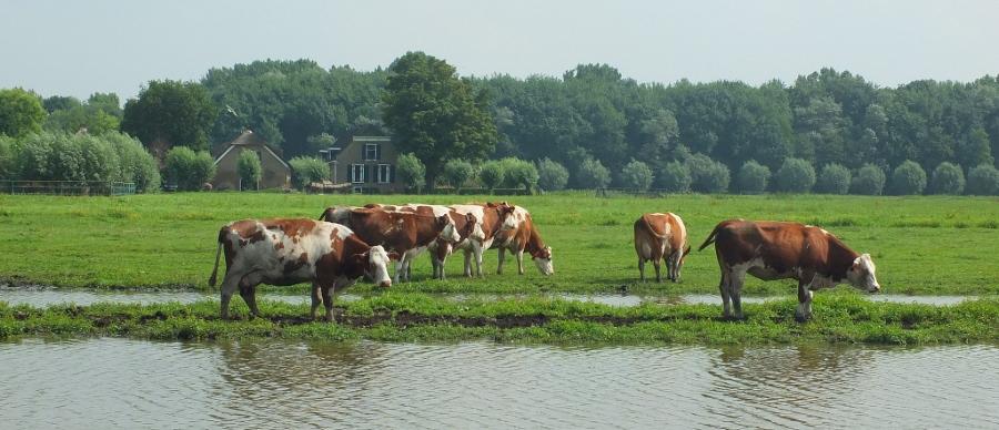 Door de Hollandse polders? (foto Gerard Stolk, flickr)