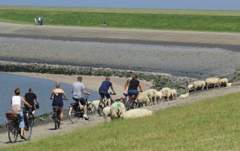 16 t/m 20 juli: Vijf dagen op de fiets langs de Friese Elfsteden