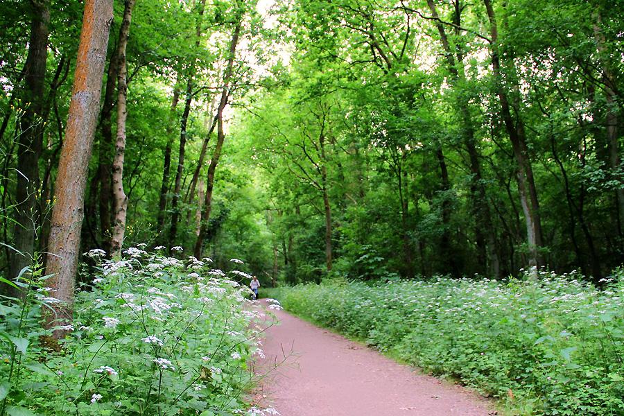 fietspad-Goois-natuurreserv