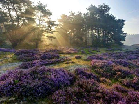 Hoe stil is het grootste natte Heidegebied van Europa?
