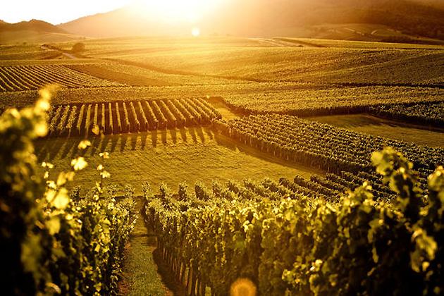 wijngaarden-Moezel