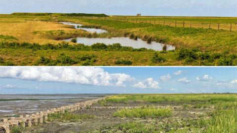 1200 km buitendijks wandelen langs onze eigen Waddenzee