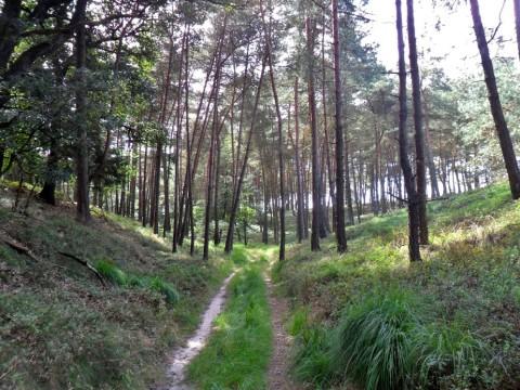 Over de onbekende paden van de Holterberg