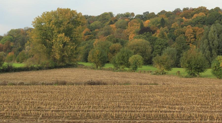Limburg herfst (2)