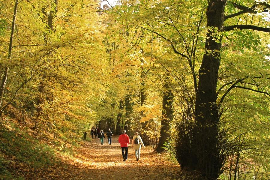 Limburg herfst (8)