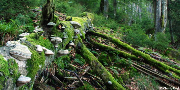 Schwarzwald-wandelen