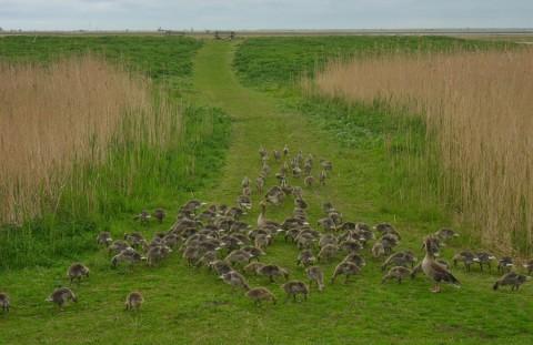 Zes weekenden wandelen op de bodem van de Zuiderzee
