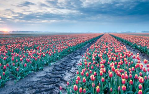Waar vind je de langste tulpenroute van ons land?