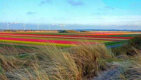 Fiets- en wandeldag in het grootste bloembollengebied ter wereld