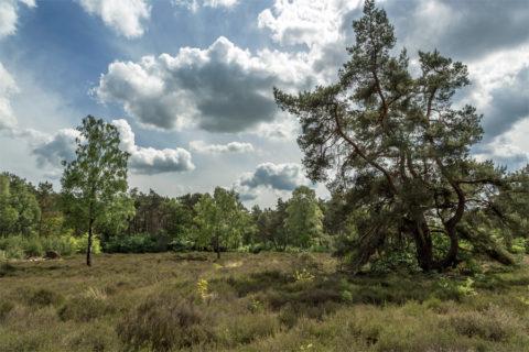 25 mei: Heuvelrug Wandeltocht Veenendaal