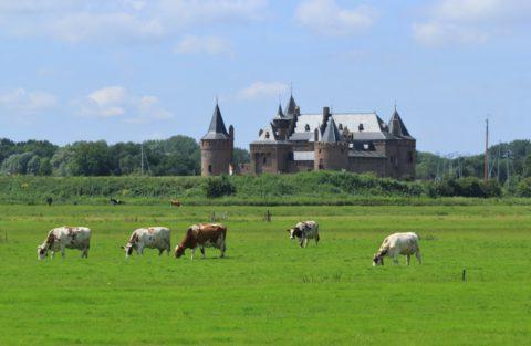 Langs de Zuiderzee loopt de mooiste route naar het Muiderslot