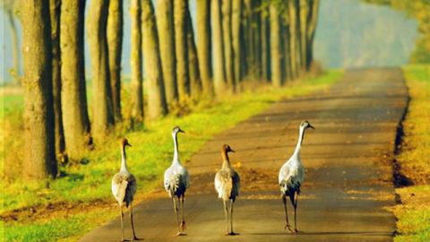 De 10 mooiste Herfstwandelingen in Vlaanderen