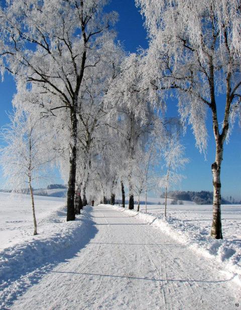 De 'Premium' Wandelwegen van winters Sauerland