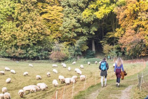 Mooiste wandelroute 2017 in uiterste puntje van Nederland