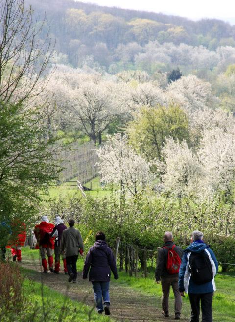 21 & 22 april: Bloesem2daagse bij het Zuid-Limburgse Vilt