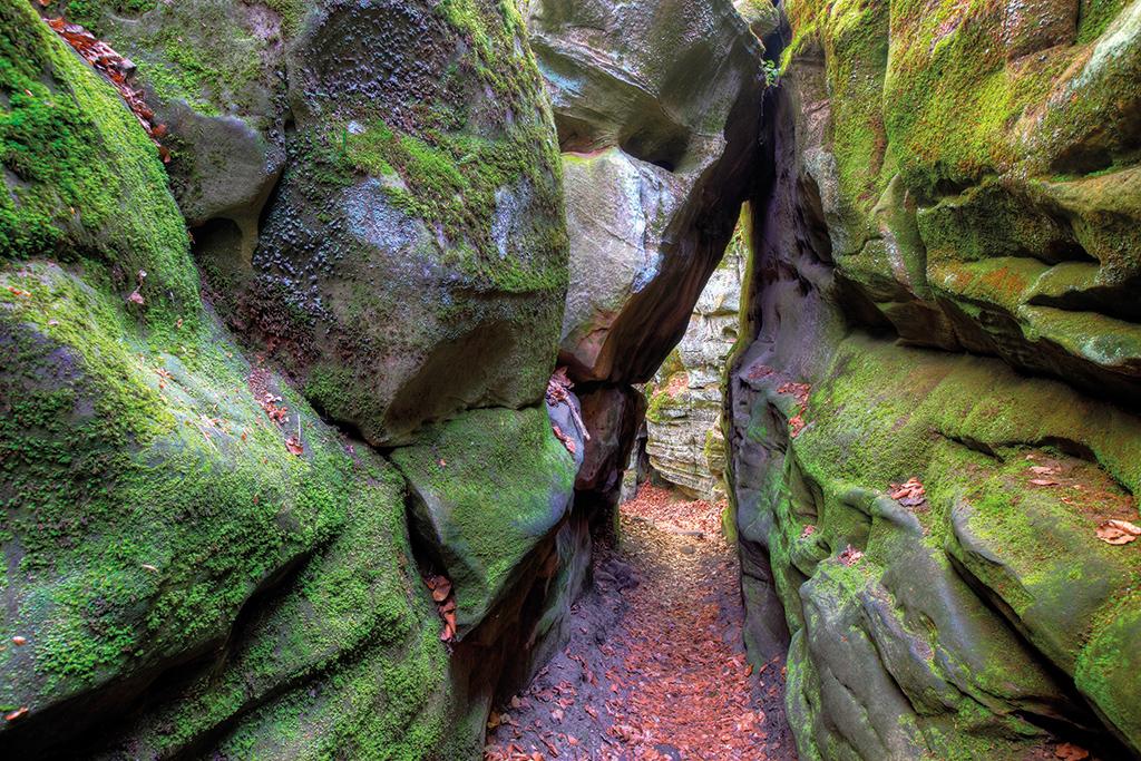 NaturWanderPark delux_felsenweg6-13-19_charly-schleder