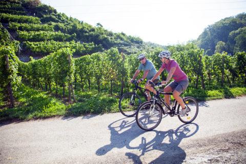 Waar de Neckar ontspringt begint een van de populairste fietsroutes van Duitsland