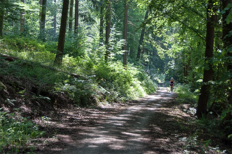 Neckarradweg-bos
