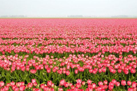 26 & 27 april: Kennedymars & Poldermars Noordoostpolder