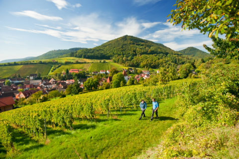 Via de wijnbergen door het grootste woud van Duitsland