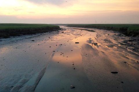 21 mei: Unieke belevenis op het Verdronken Land van Saeftinghe