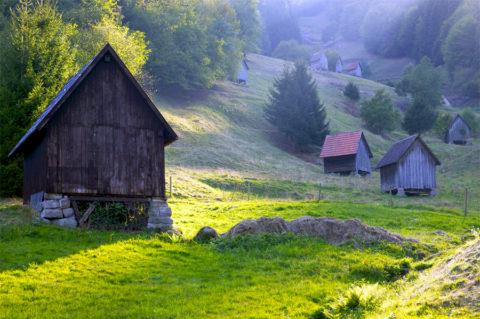 Dit oudste wandelpad laat je het beste van het Zwarte Woud zien