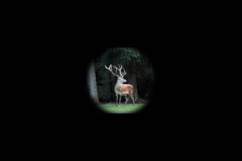 12 juni: Avond wildexcursie De Dellen