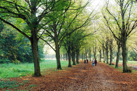 9 juli: Meet, Walk & Talk in het Amsterdamse Bos