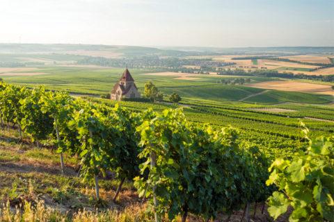 Over de 'Hiwwels' in het grootste en zonnigste wijngebied van Duitsland