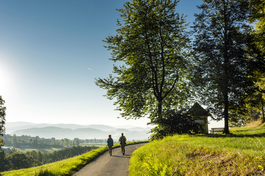 Goldsteig_Wanderer-bei-Haunkenzell,-Etappe-S14