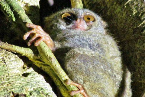 Jetty's jungletocht naar zeldzame dieren
