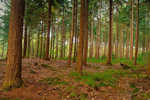 14 & 15 sept: Bos en heide wandeltocht Wezuper Heide