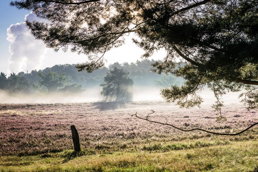 Fischbecker-Heide-2016-MT_DSC_7721